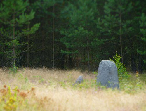 Cmentarzysko Gotów w Babim Dole